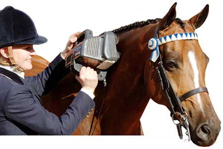 [Equine Professional Massager]
