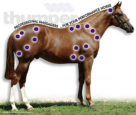 [Horse massage benefits]